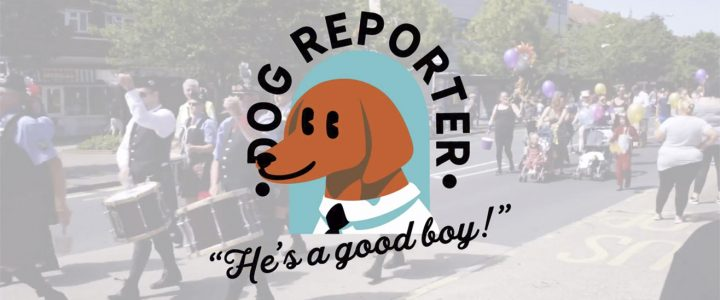 dog-reporter-featured-wr
